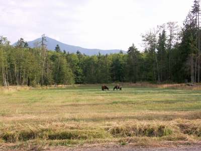 Sequim Horse Ranch
